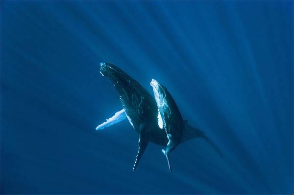 Oceans Photo 16 - Large