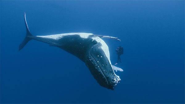 Oceans Photo 6 - Large