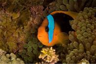 Oceans Photo 26