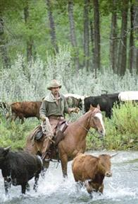 Open Range Photo 8