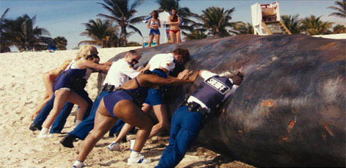 The brave and resourceful men and women of the Reno Sheriff's Department, on special assignment in Miami, put their all into dealing with a beached whale. From left, they are: Deputy Clementine Johnson (Wendi McLendon-Covey), Deputy Trudy Wiegel (Kerri Kenney-Silver), Deputy James Garcia (Carlos Alazraqui), Lieutenant Jim Dangle (Thomas Lennon), Deputy Raineesha Williams (Niecy Nash) and Deputy Travis Junior (Robert Ben Garant). - Large