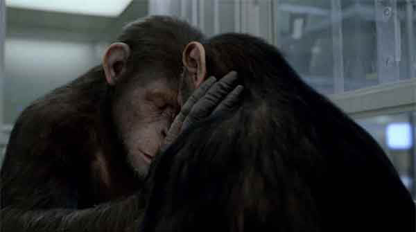 Rise of the Planet of the Apes Photo 3 - Large