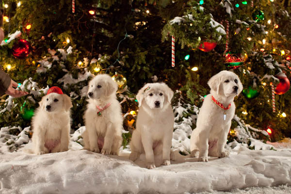 Santa Paws 2: The Santa Pups Photo 4 - Large