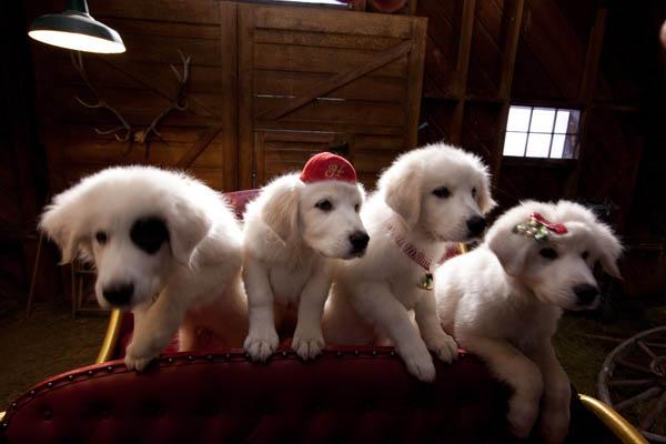 Santa Paws 2: The Santa Pups Photo 6 - Large