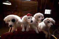 Santa Paws 2: The Santa Pups Photo 6