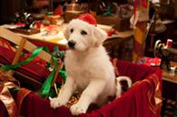 Santa Paws 2: The Santa Pups Photo 1