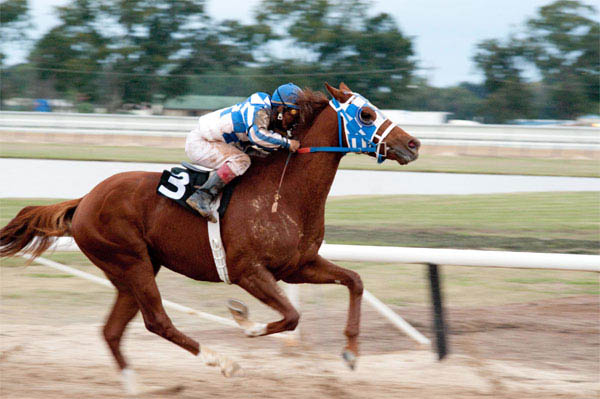 Secretariat Photo 12 - Large
