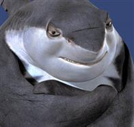 Shark Tale Photo 10