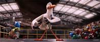 Storks Photo 33
