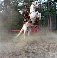 The Alamo Photo 9