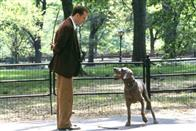 Maid in Manhattan Photo 9