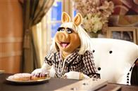 The Muppets Photo 8
