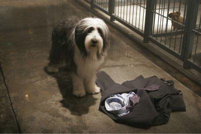 The Shaggy Dog Photo 11 - Large