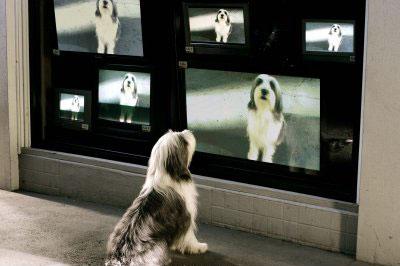 The Shaggy Dog Photo 1 - Large