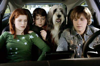 The Shaggy Dog Photo 2 - Large