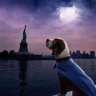 Underdog Photo 16