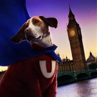 Underdog Photo 18