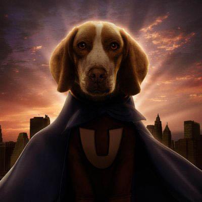 Underdog Photo 23 - Large