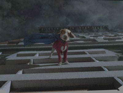 Underdog Photo 9 - Large