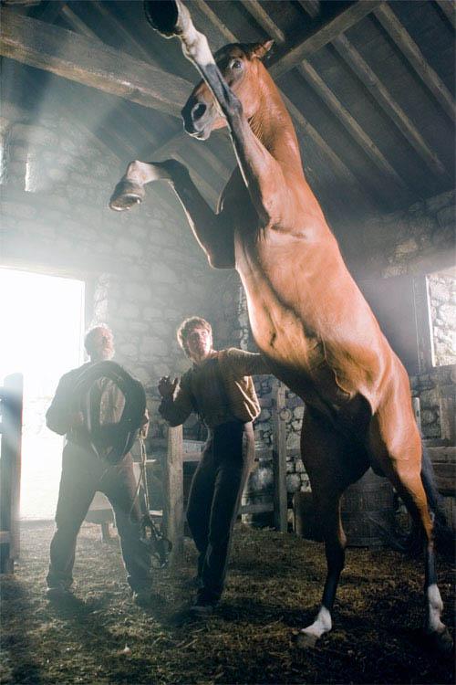 War Horse Photo 17 - Large
