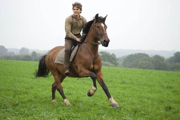 War Horse Photo 8 - Large