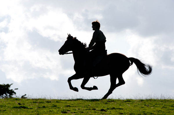 War Horse Photo 6 - Large