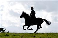 War Horse Photo 6