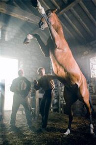 War Horse Photo 17