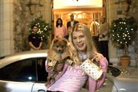 White Chicks Photo 2