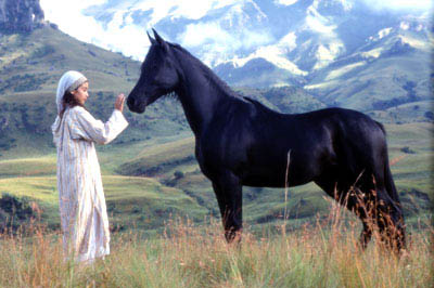 Young Black Stallion Photo 1 - Large